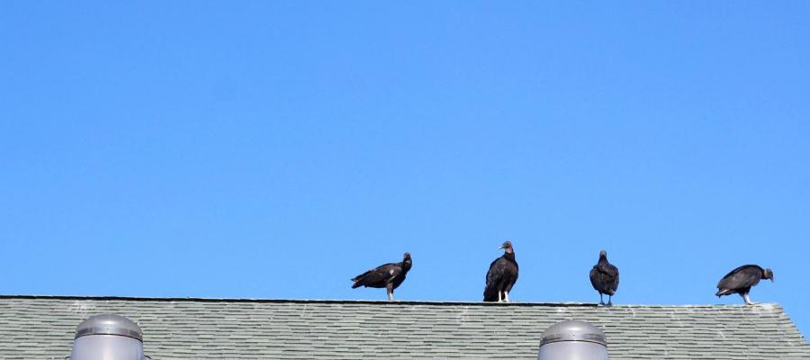 Come allontanare i volatili dal tetto definitivamente